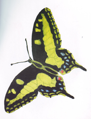 leptir (1)