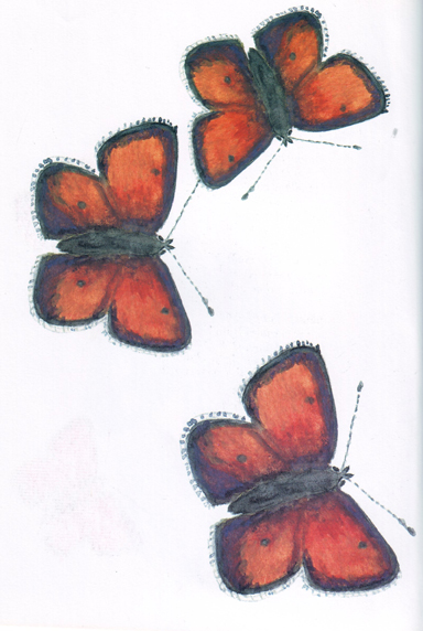 (Palaeochrysophanus hippothoe L.)