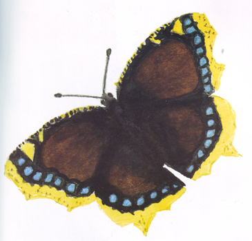 (Nymphalis antiopa L.)